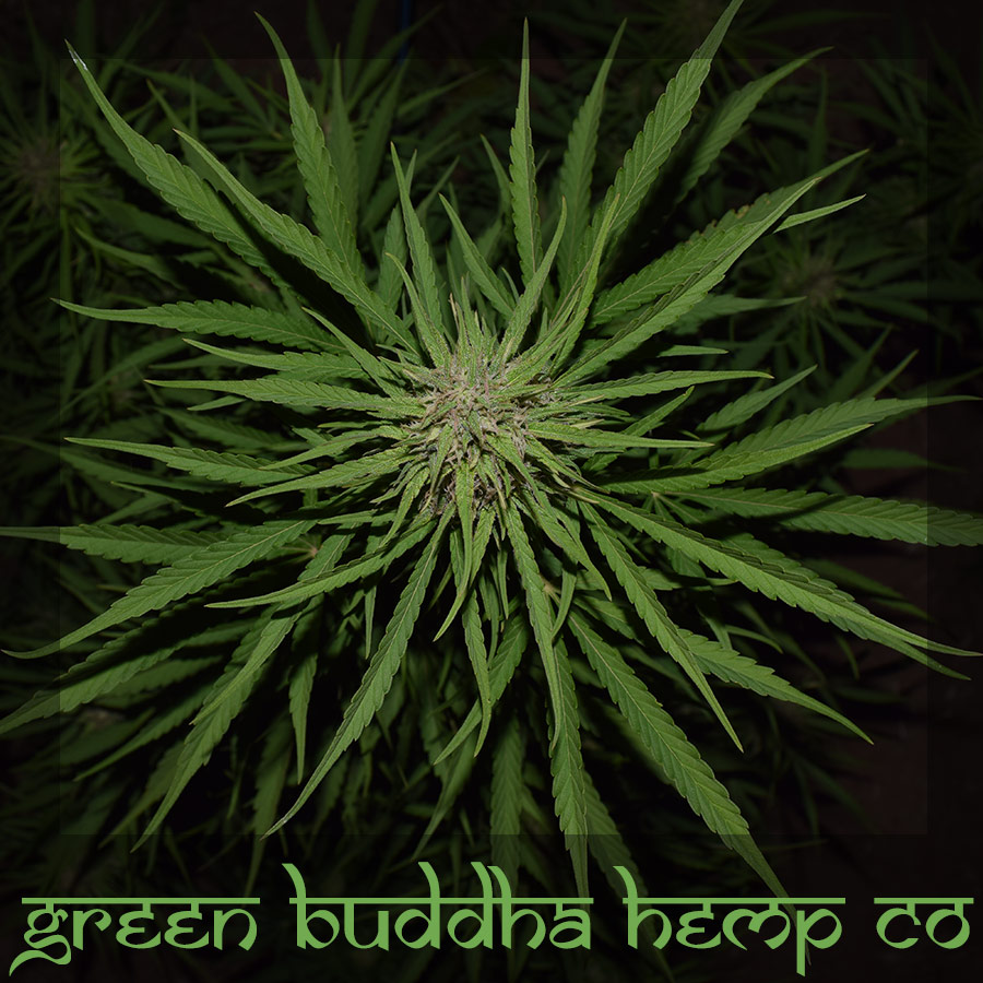 Green Buddha Hemp Co Fiber And Cbd Products
